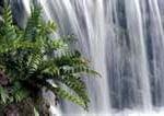 ÁGUA: Métodos de desintoxicação natural