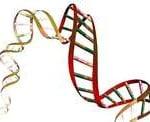 Quem Descobriu o DNA