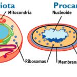 Semelhanças entre as Células Procariotas e Eucariotas