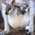 Método Mãe-Canguru