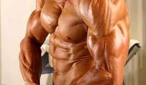 O Músculo mais forte do corpo humano