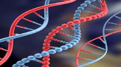 Papel da composição genética na Saúde