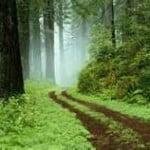 Manejo Florestal na Amazônia