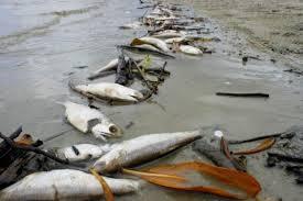 Criaturas mortas cobrem o fundo do oceano após acidente de Fukushima