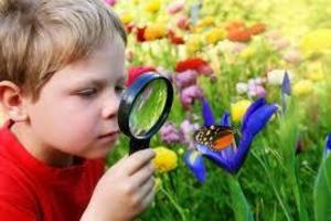 Curiosidade Você Sabia